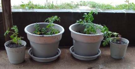 a-blog-tt-container-garden-001.jpg