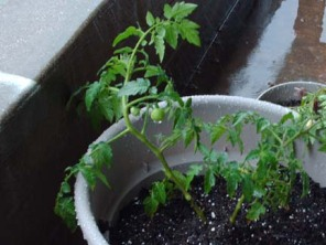 a-blog-tt-container-garden-004.jpg